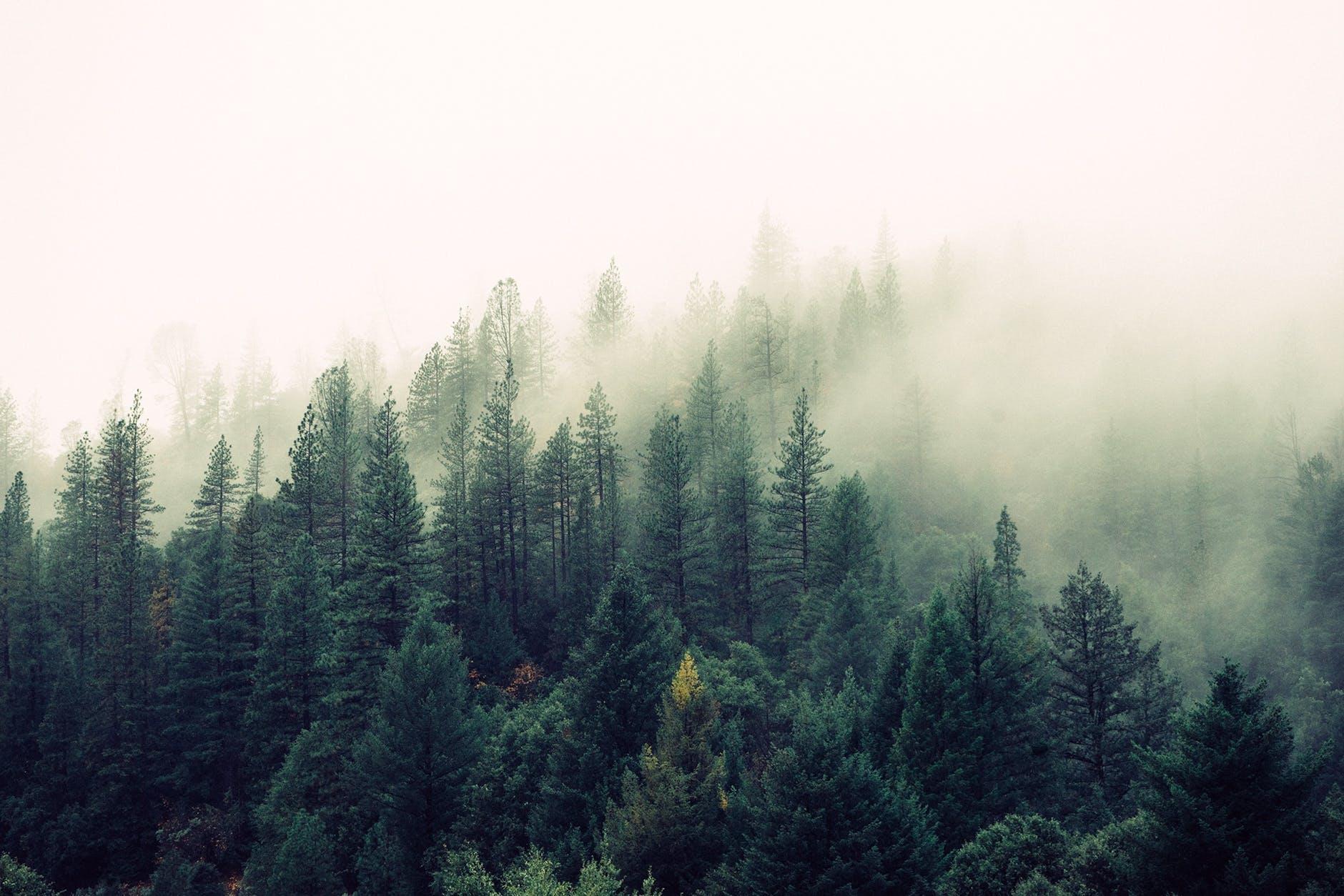 Les zahalený v hmle.